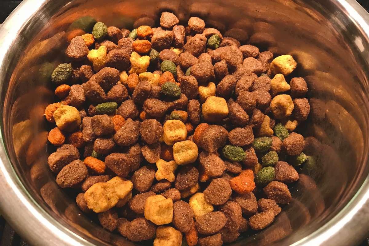 Alimenti che il vostro cane non deve ingerire
