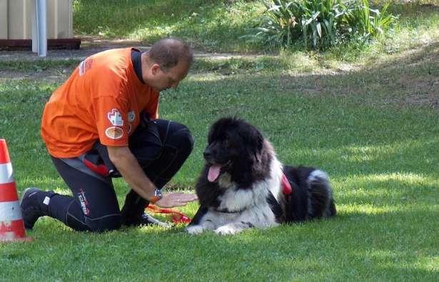 Corsi psicologia canina di base (Educatore cinofilo)