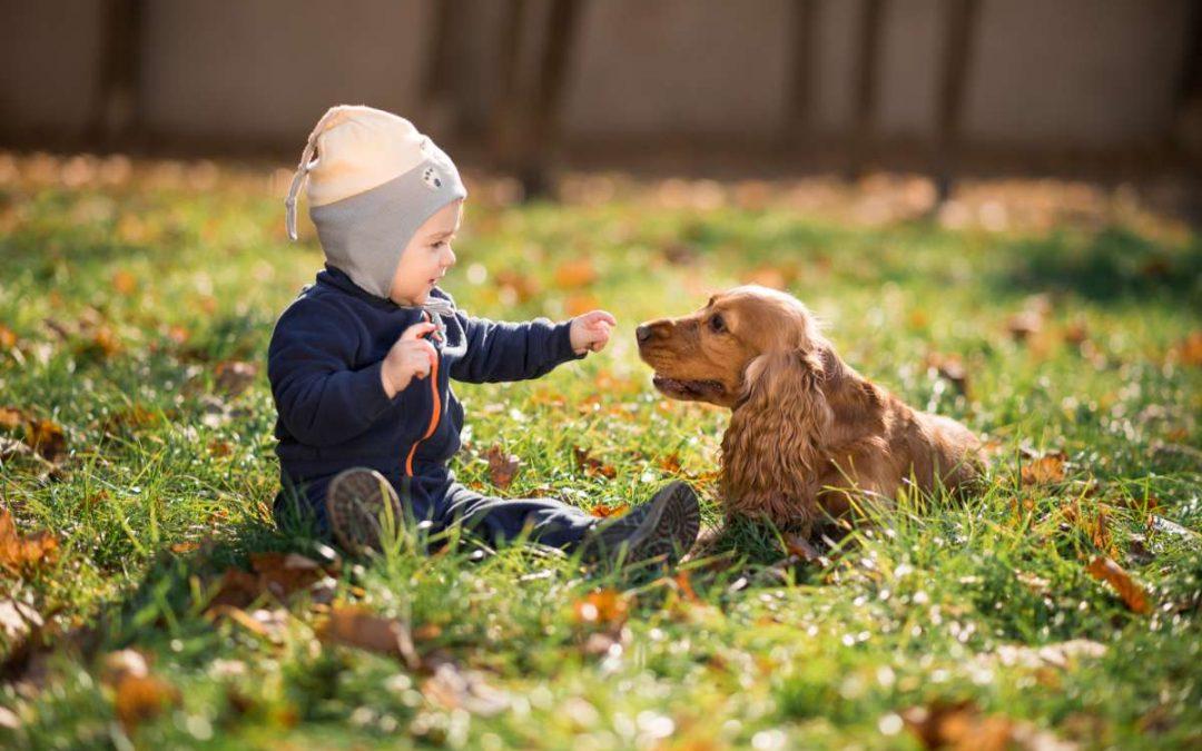 Le 10 migliori razze di cane per i bambini