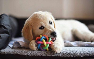 Oggetti o giocattoli non adatti ai cani