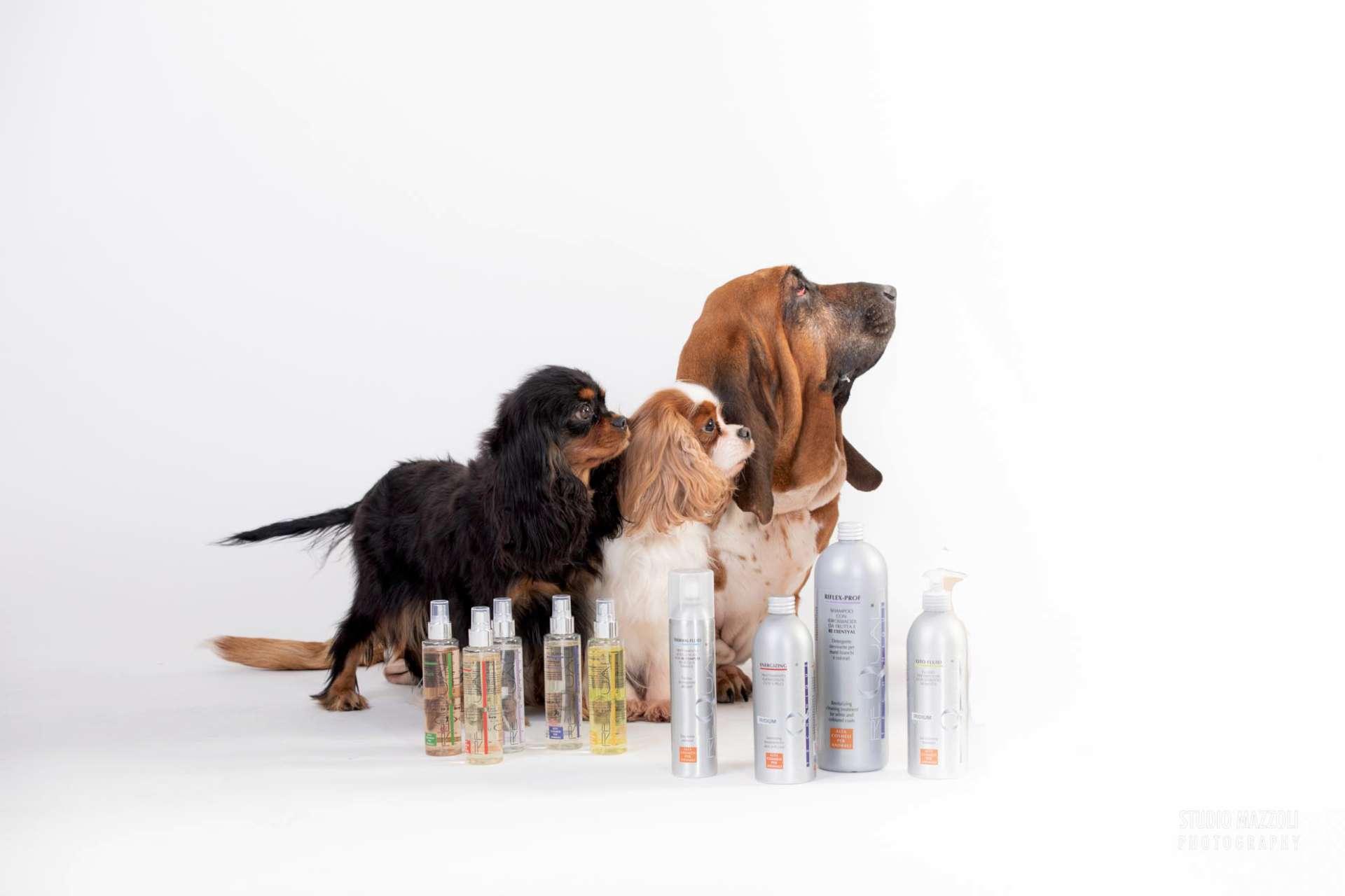 Cani e toelettatura