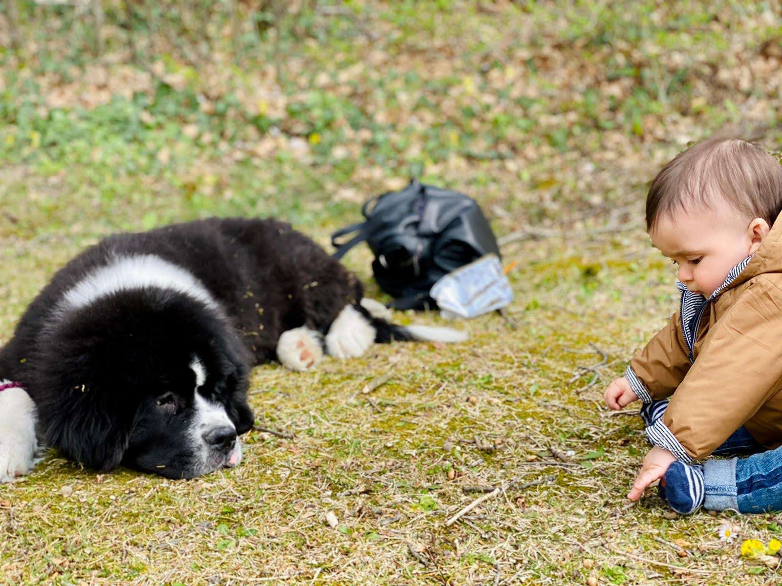 Cani per pet therapy