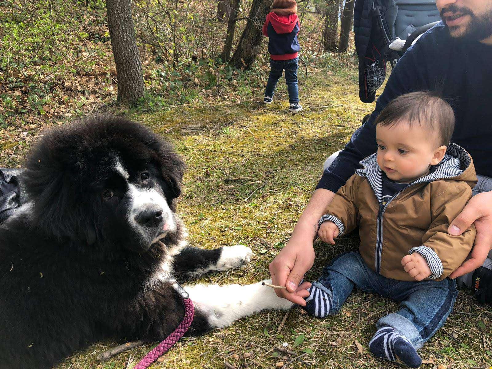 Corsi per pet therapy
