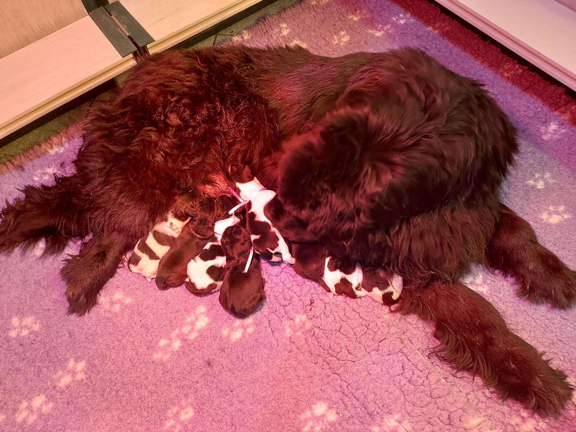 Mamma allatta cuccioli