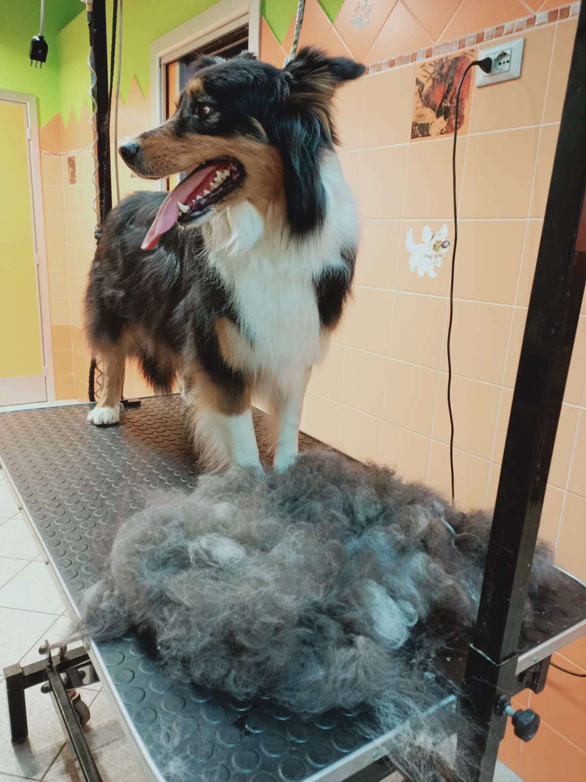 Toelettatura cane medie dimensioni