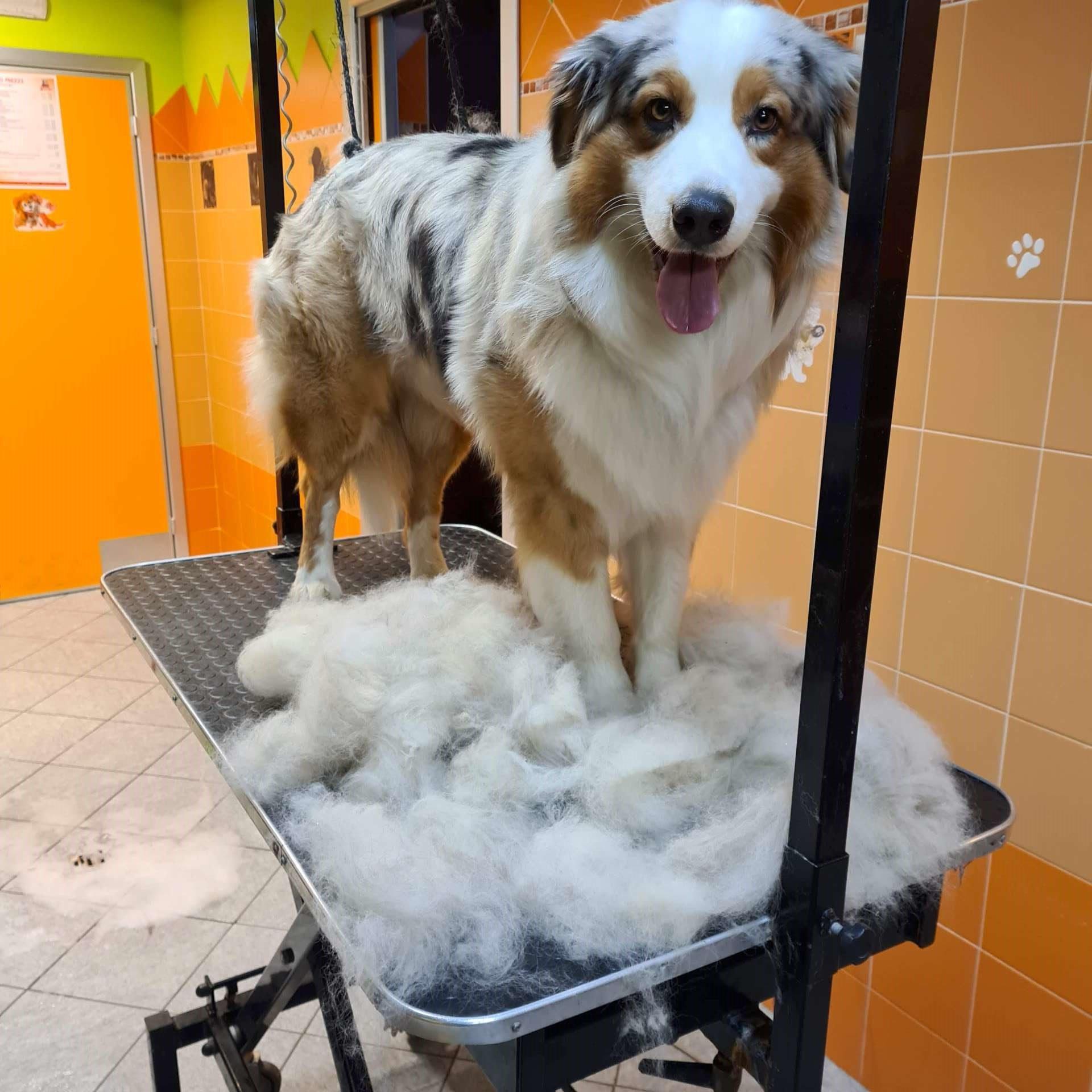 Toelettatura cani rotated