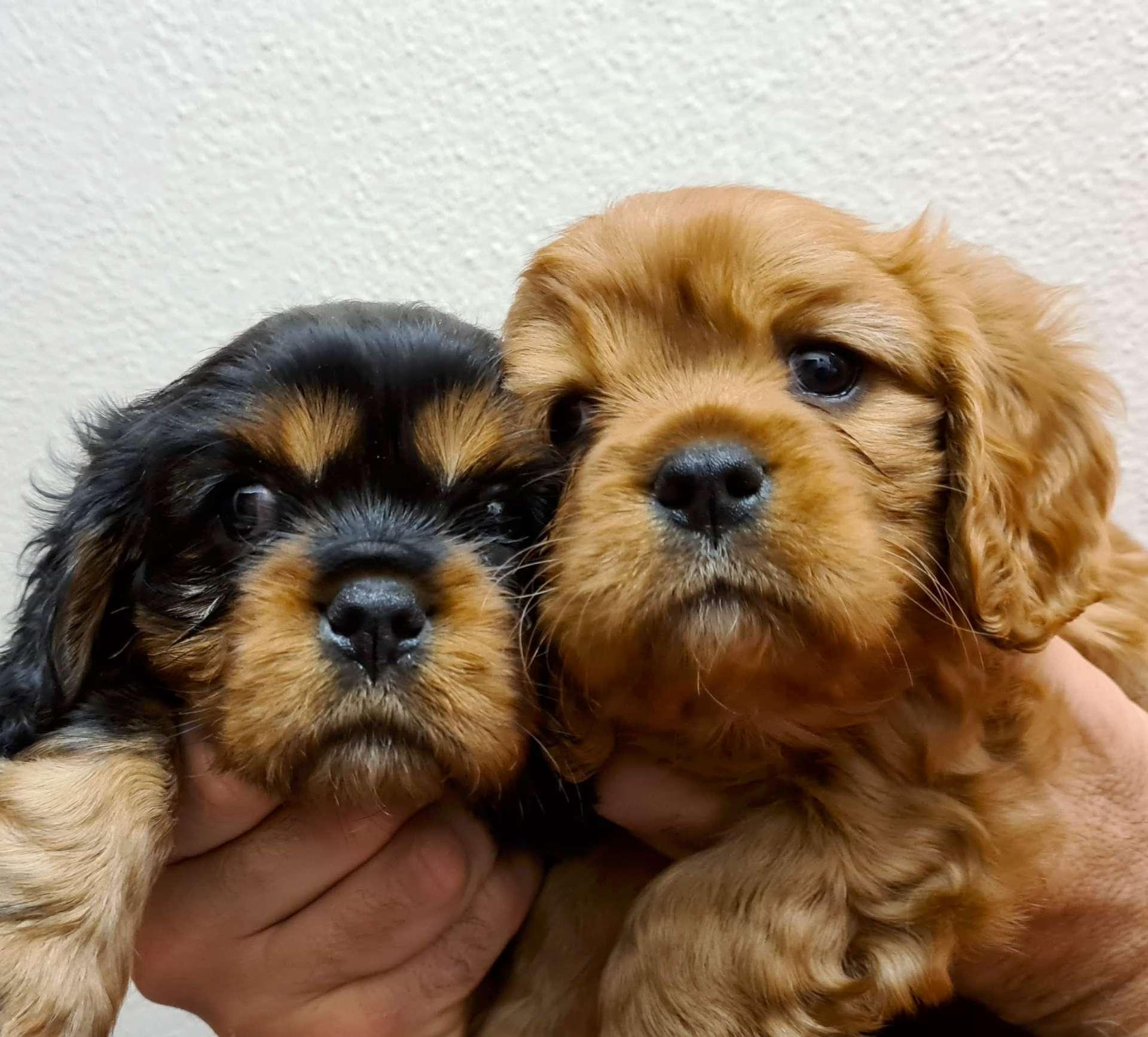 Toelettatura cuccioli